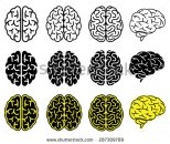 stock-vector-set-of-human-brains-vector-illustration-287309789.jpg